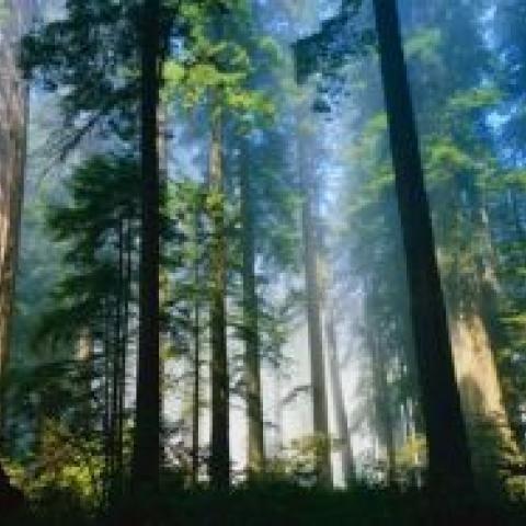 Лес ушел в город. Дачники попали под вторую амнистию.