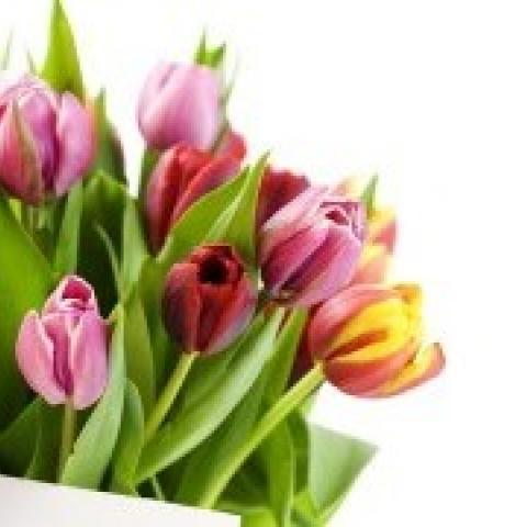 Коллектив агентства поздравляет всех женщин с весенним праздником.