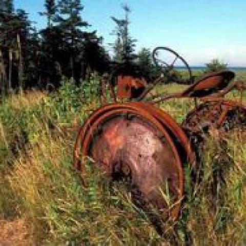 Неиспользуемые земли сельхозназначения найдут новых хозяев.