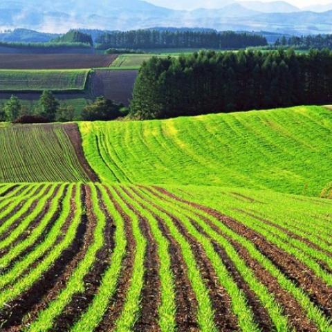 В Крыму посчитают земли сельскохозяйственного назначения.