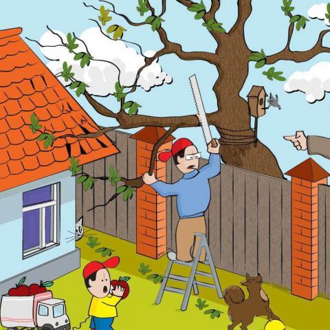 О соседских правах и других земельных новшествах.
